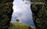 loneay_tree_w.jpgzzzz