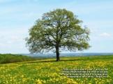 tree_solitary.jpgzzzz